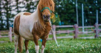 Ponnyridning på Bjurslättsskolan!